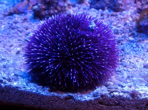 Aqua-monaco-006.jpg