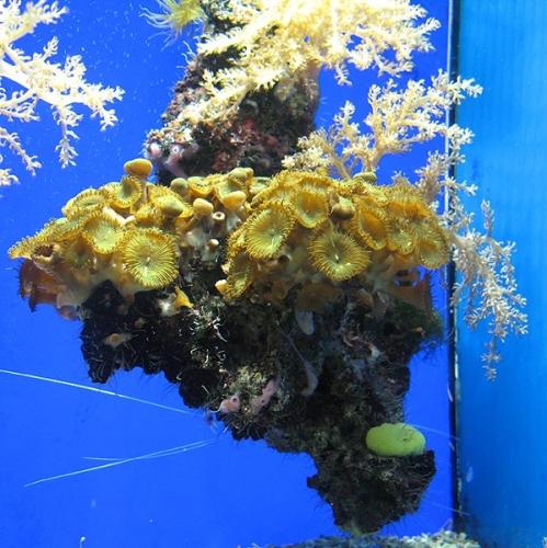 Aqua-monaco-018.jpg