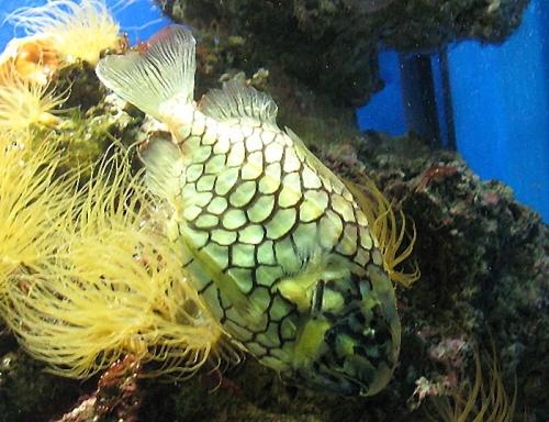 Aqua-monaco-016.jpg
