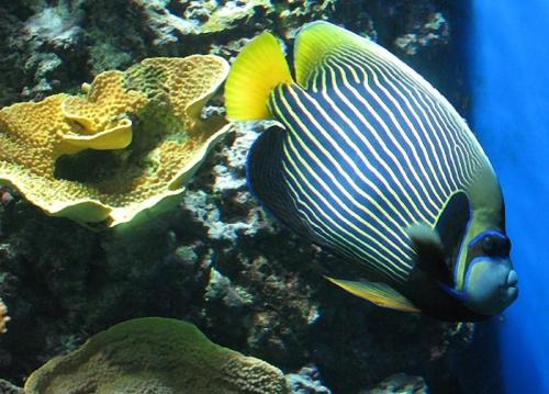 Aqua-monaco-001.jpg
