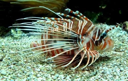 Aqua-monaco-021.jpg