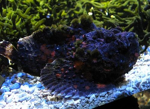 Aqua-monaco-013.jpg