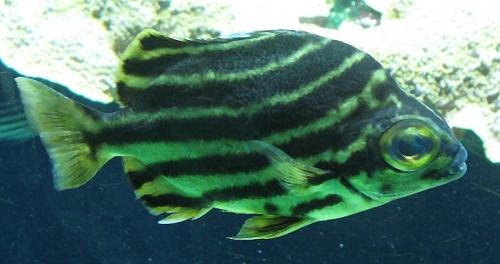 Aqua-monaco-002.jpg
