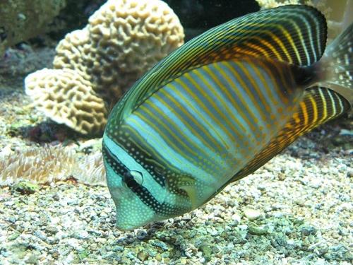 Aqua-monaco-020.jpg