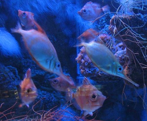 Aqua-monaco-004.jpg